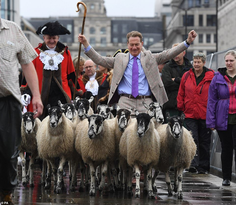 Sheep Drive over London Bridge